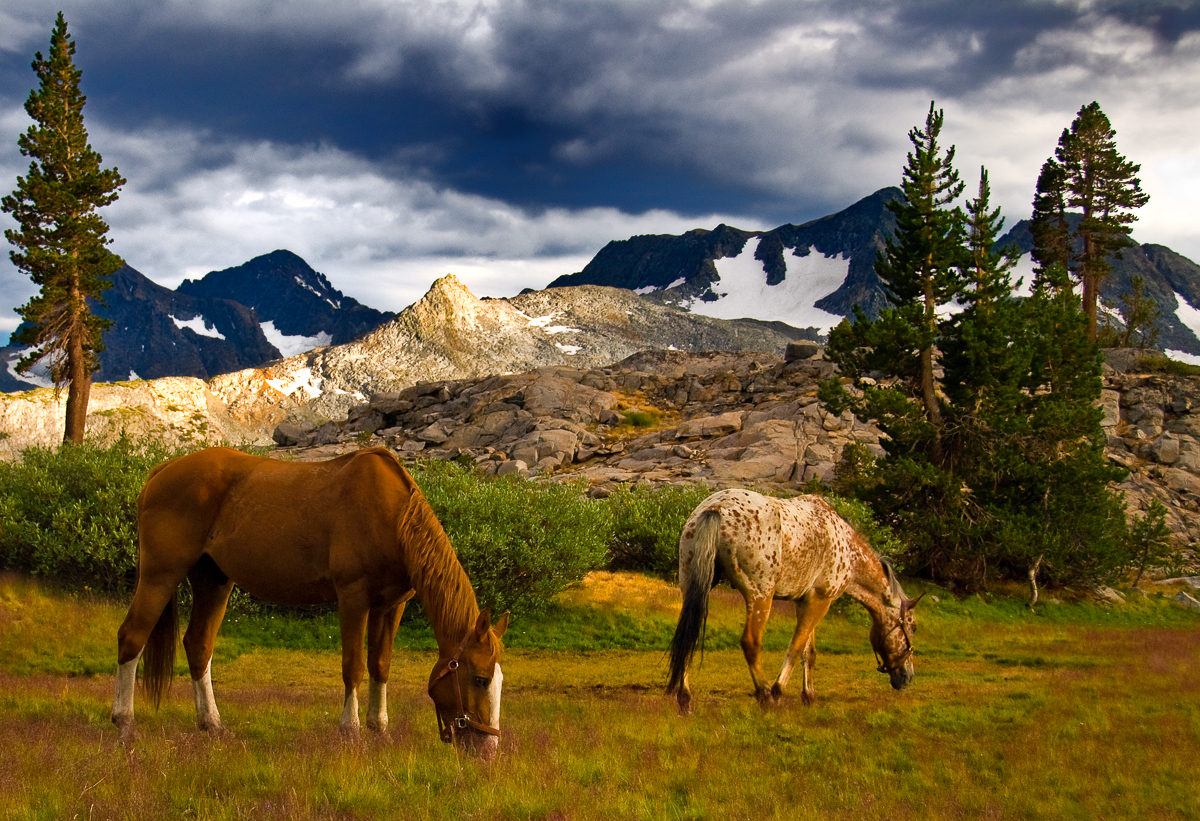 15 Printed Horses Free Grazing Near Rush Creek Ansel Adams Wilderness_.jpg