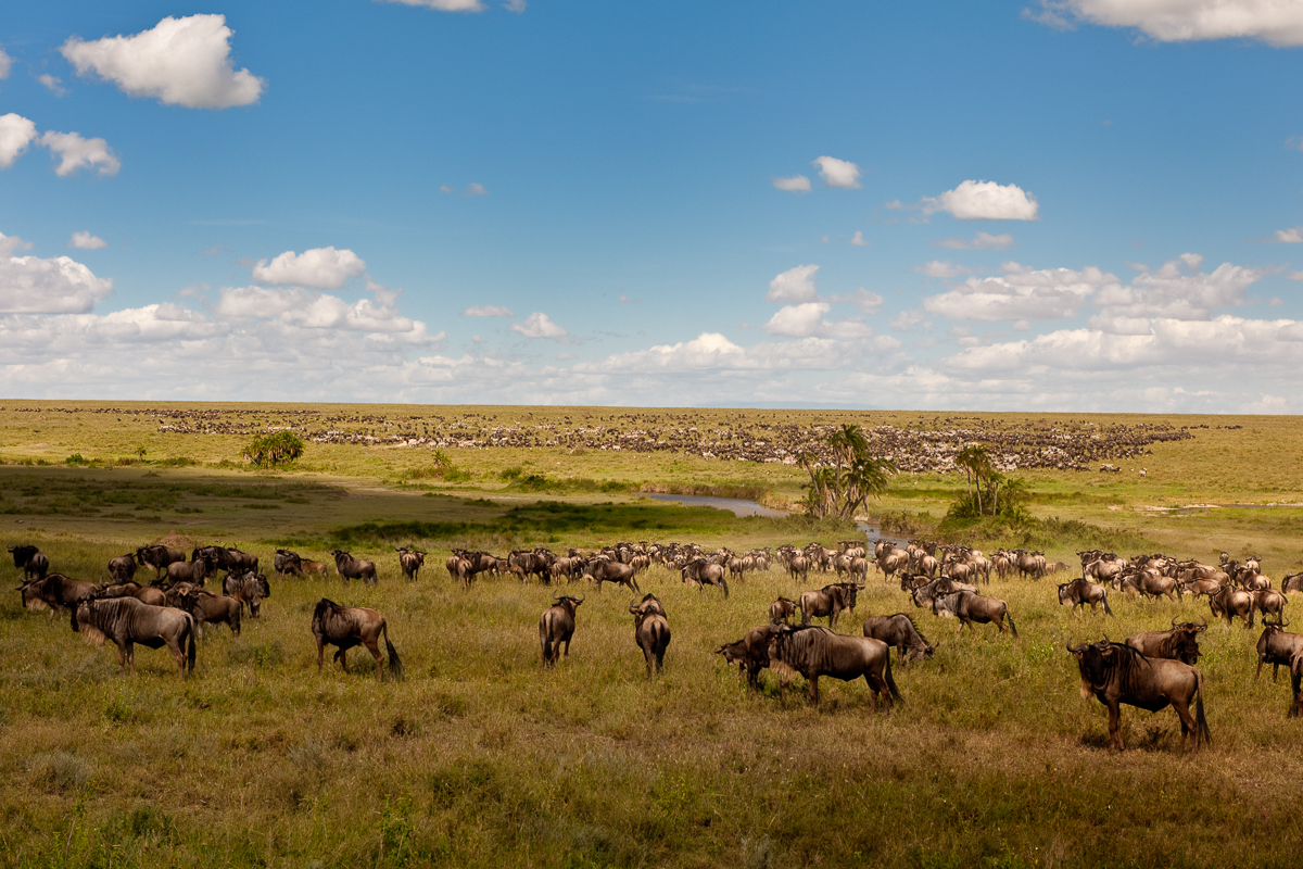 38 Central Serengeti 5-4-09-1312-Edit.jpg