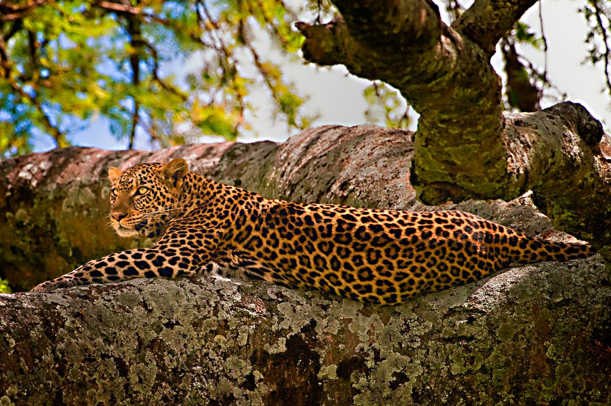 41 Central Serengeti 5-5-09-261-Edit-Edit.jpg